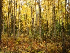 Lot 16 birch grove