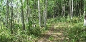 Trail above residential lots - available for use by residents